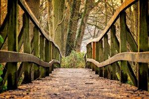Emetofobi, angst for opkast, vejen væk, bro